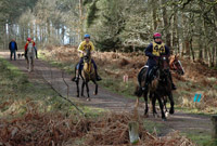 Riders enjoying the Forest of Dean